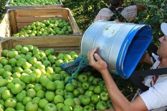 L'agriculture en Lot-et-Garonne recrute des saisonniers