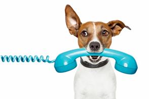 Supera con exito una entrevista telefonica