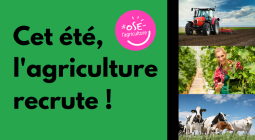 L'agriculture en Finistère : un florilège d'emplois de proximité !