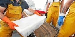 La filière des produits de la mer a sa plateforme de recrutement